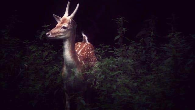 Ein Reh in einem dunklen Wald.