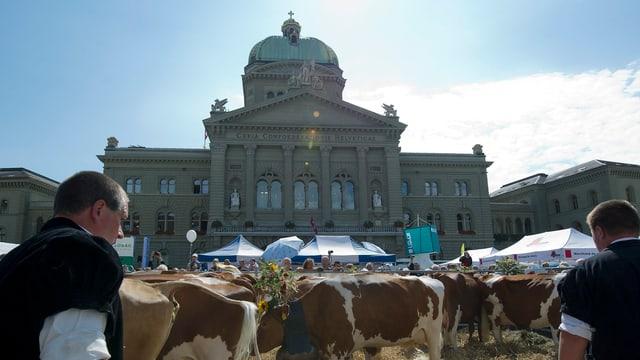 Bauern und Kühe vor Bundeshaus