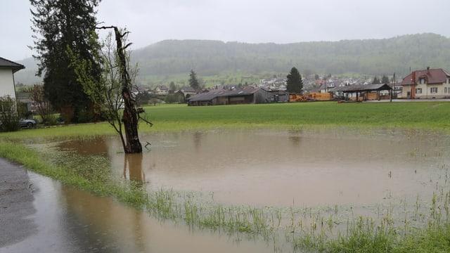 Ein Baumstamm steht in einem Tümpel auf einer Wiese. Im Vordergrund ist noch knapp eine Strasse mit Wasser darauf zu erkennen.