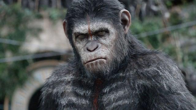 Affenführer Caesar mit Kriegsbemalung Porträt.