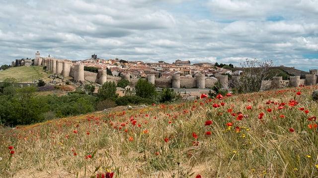 Hinter einer Blumenwiese ist eine Altstadt zu sehen mit einer eindrücklichen Stadtmauer.