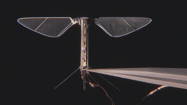 Video «Faszination Bionik: Vom Genie der Natur lernen» abspielen