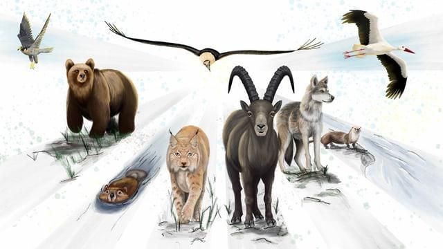Wildtiere der Schweiz