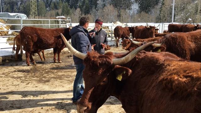 il reporter Sergio Guetg e la pura denter las vaccas