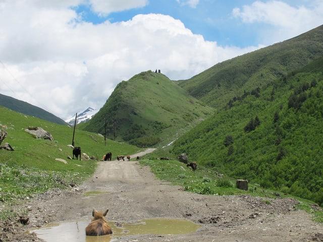 Ein holpriger Weg führt in ein Tal hinein. Es ist in einer grünen Landschaft von Georgien.