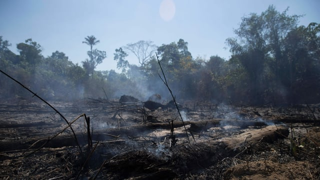 Brasilien, Regenwald, Abholzung.