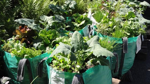 Bild von Gemüse und Kräuter.