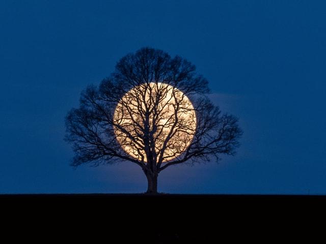 Im Vordergurnd eine Baum, dahinter leuchte der weisslich gelbe Mond.