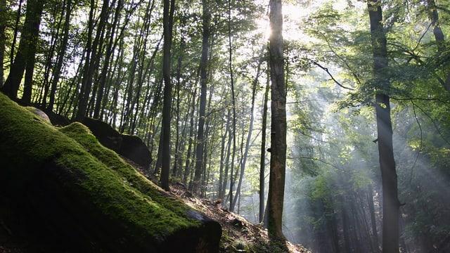 Video «Geheimnis Wald» abspielen
