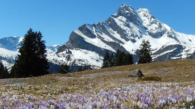 Berg im Glarnerland
