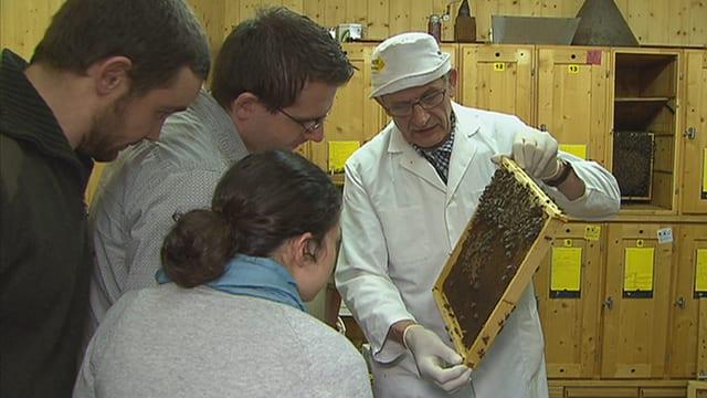 Drei Teilnehmer eines Imker-Kurses im Aargau betrachten Bienen auf den Waben, die ihnen der Lehrer zeigt..