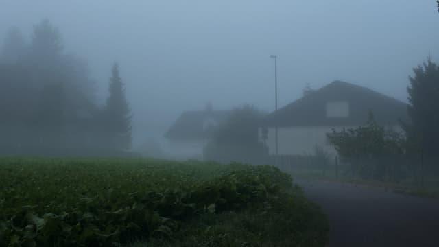 Neblige Strasse in einem Wohngebiet am Waldrand.