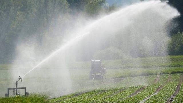 Bewässerung der Felder