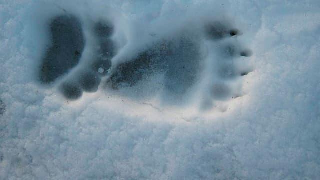 Abdruck Bärentatze im Schnee (Symbolbild)