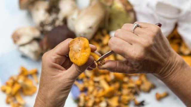 Hände halten kleines Messer und Pilz.