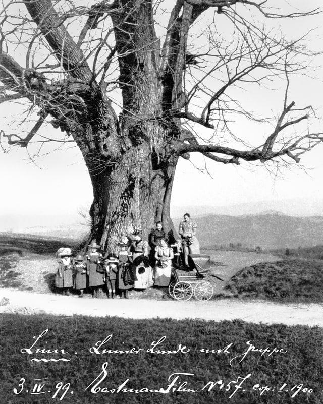 Die Linde von Linn auf einer Postkarte von 1899.