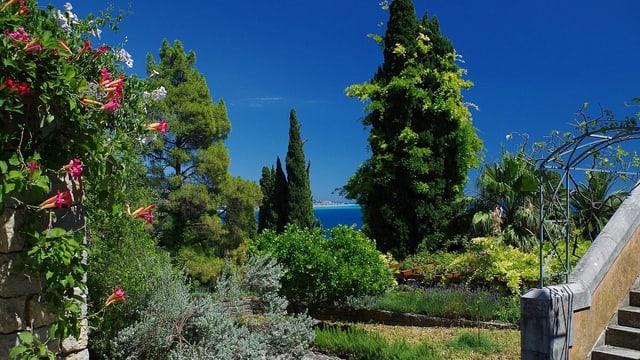 Video «Magische Gärten – Italien: Botanischer Garten von Hanbury» abspielen