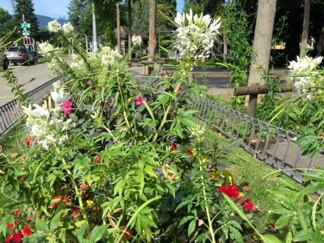 Blumenrabatte in der Stadt Zürich