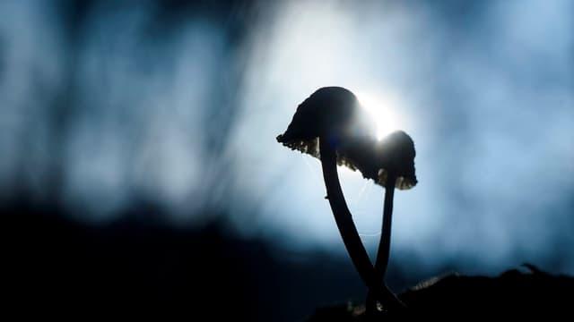 Pilze vor der Sonne