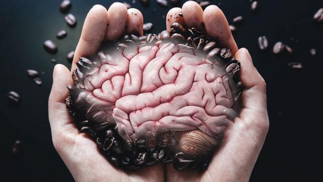 Ein Mann hält Kaffeebohnen in seinen beiden Händen. Darin sit ein Gehirn zu erkennen.