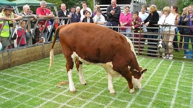 Und da hat die Kuh sich entleert.