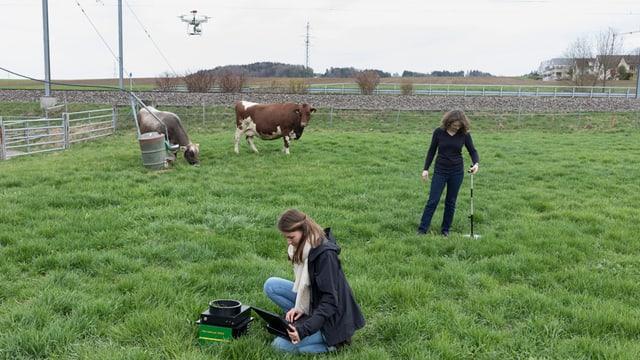 Zwei Forscherinnen machen Messungen auf einer Kuhweide. Über der Wiese schwebt eine Drohne