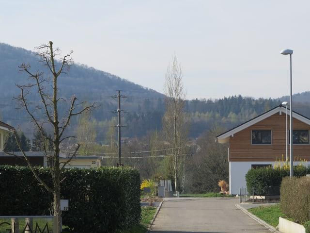 Quartierstrasse mit einem Baum