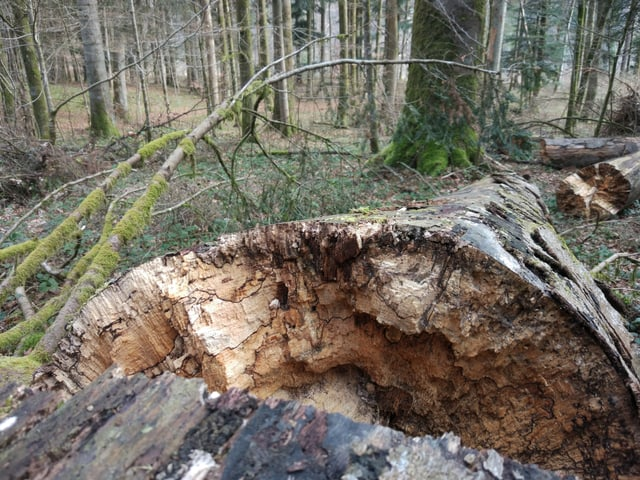 abgebrochenen Baumstamm