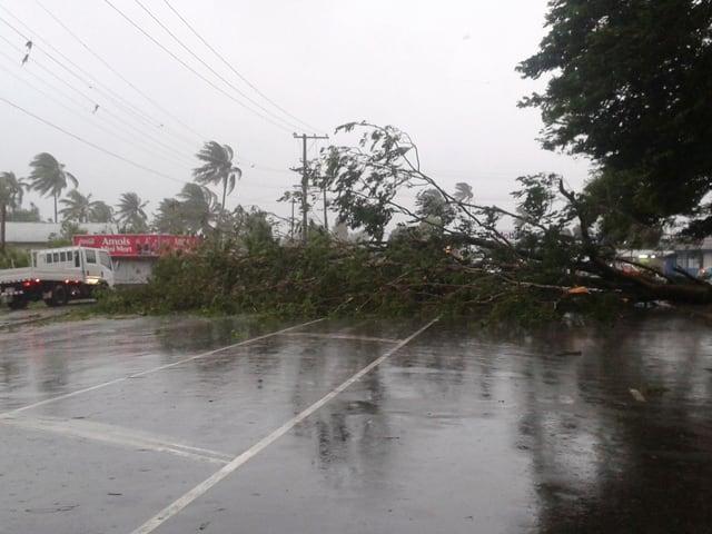 Ein umgestürzter Baumstamm auf einer Strasse