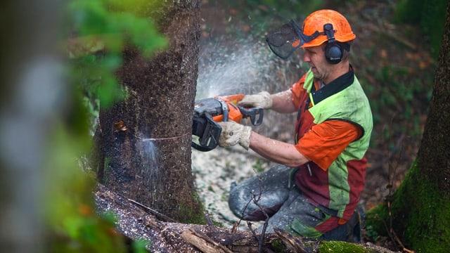 Ein Mann fällt einen Baum mit einer Motorsäge