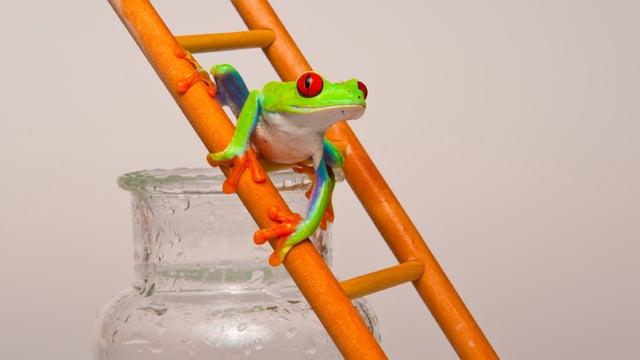 Ein grüner Frosch klettert eine kleine Leiter hoch, die an einem Einmachglas lehnt.