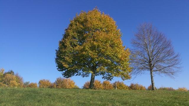 Ein Baum grün, der andere kahl.