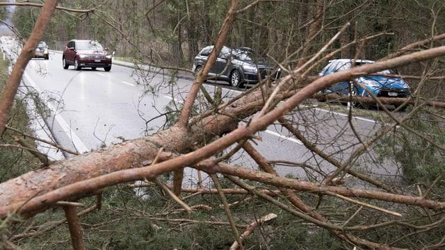 Ein umgestürzter Baum behindert die Durchfahrt auf einer Strasse in Bülach.