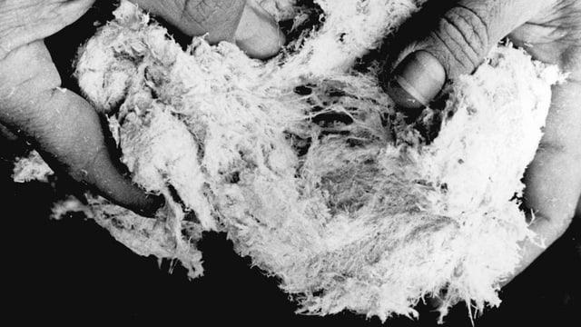 Astbestfasern auf einer undatierten Aufnahme.