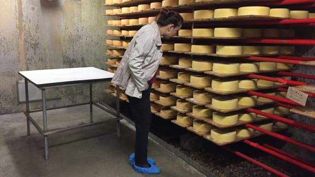 Eine Frau steht vor einem ganzel Regal mit Käselaiben.
