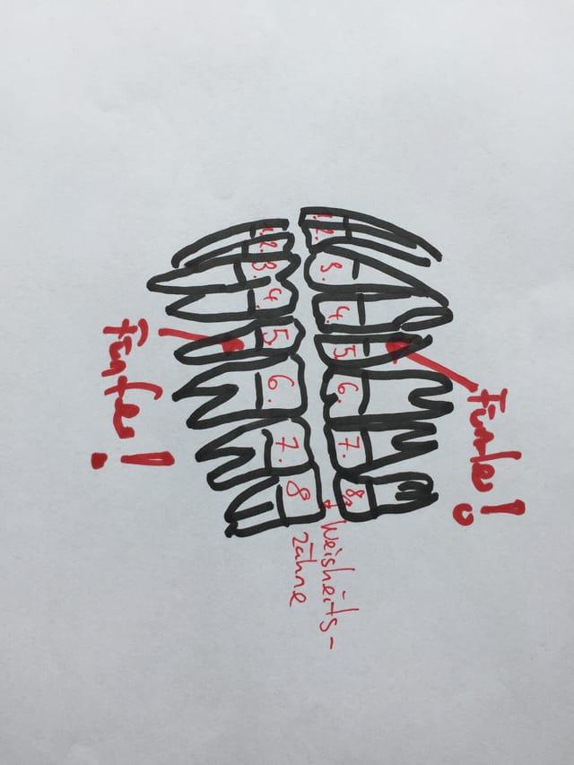 Gezeichnetes Zahnnummernschema des Ober- und Unterkiefers