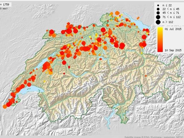 Schweizkarte mit Ort und Anzahl der beobachteten Störche zwischen Juli und September,