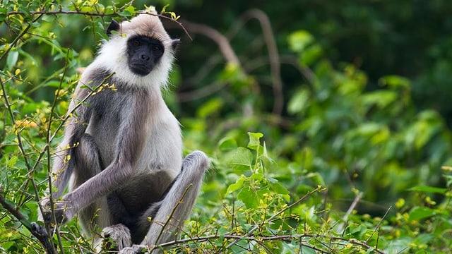 Video «Wildes Sri Lanka – Waldwelt (2/3)» abspielen
