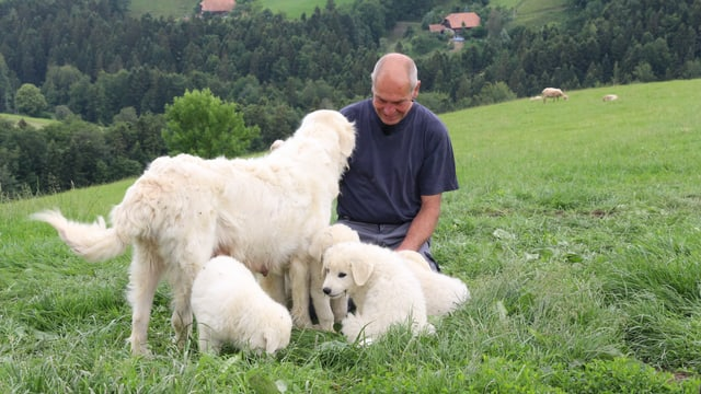 Ueli Pfister sitzt inmitten seiner Hunde.