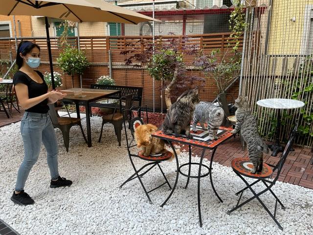 Frau steht neben Tisch mit vier Katzen