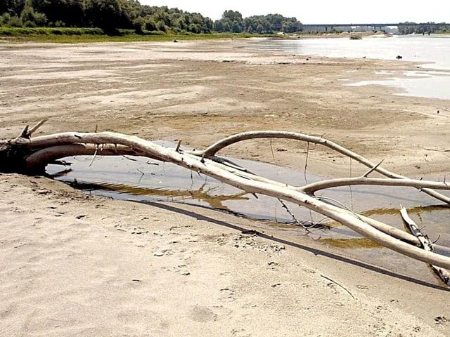 Niedrigwasser im Juni 2003 in der Poeebene, sandiges Ufer und ein angeschwemmter Baum am Sand.