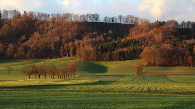 Im Limpachtal war es am Sonntagnachmittag bereits wieder grün.