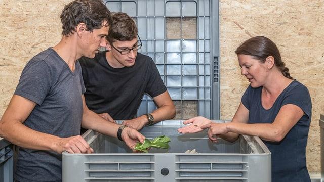 Drei Personen stehen um Kisten mit Insekten