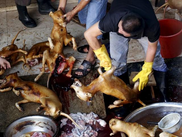 Hundeschlachthaus im chinesischen Yulin