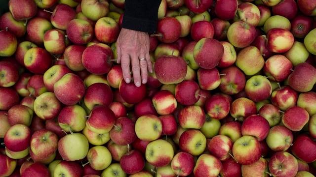 Hand greift nach Äpfeln