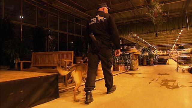 Security und Schäferhund