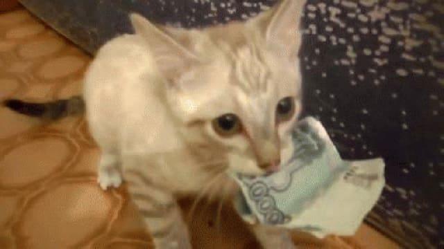 Katze mit Notenbündel im Mund
