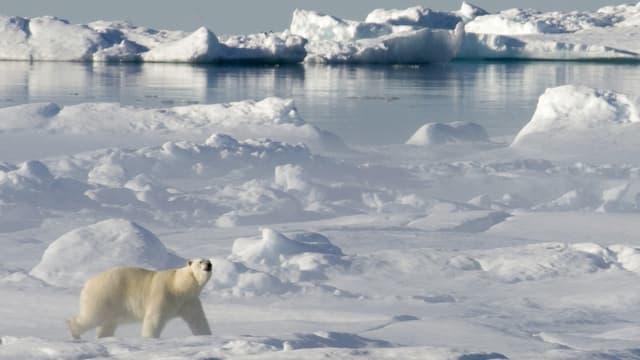 «Aufbruch in die Arktis»