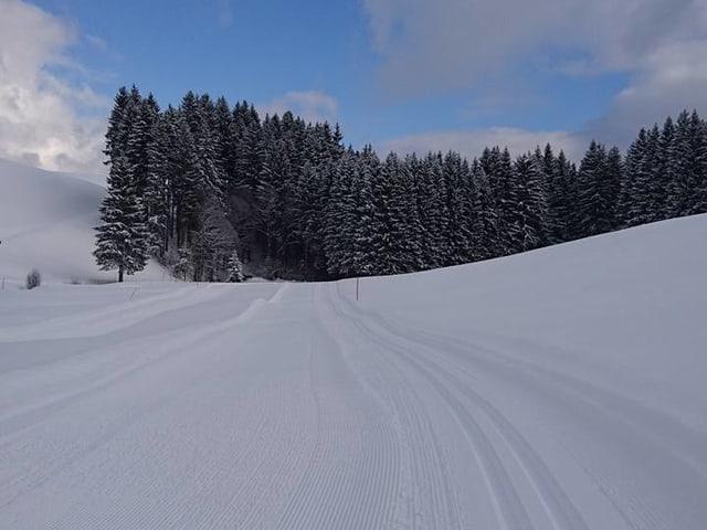Langlaufloipe in verschneiter Landschaft.