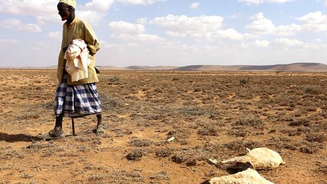 Mann mit toten Ziegen in der Wüste Somalilands.